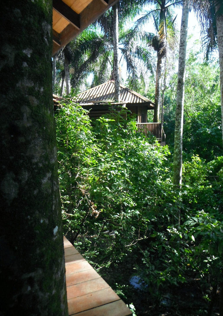 Treehouses at Rancho Platon